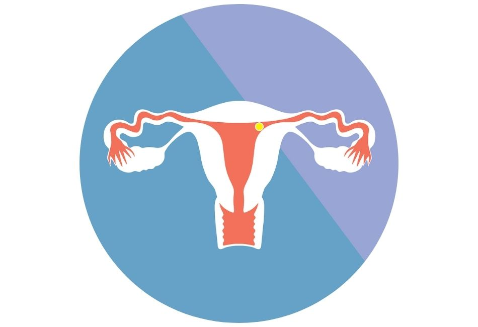 Wann kann man schwanger werden? Zyklus erklärt Phase 4